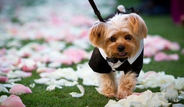 Dogs in wedding wedding planner tampa