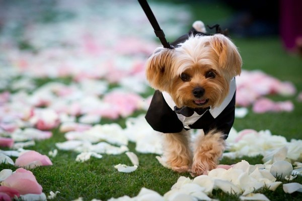 Dogs In Wedding Planner Tampa